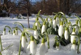 Весна идёт.
